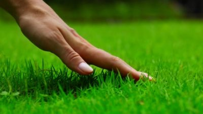 Moving into a New Home? Here are 5 Tips to Make Sure Your Lawn Looks its Best